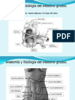 Fisiologia Colon