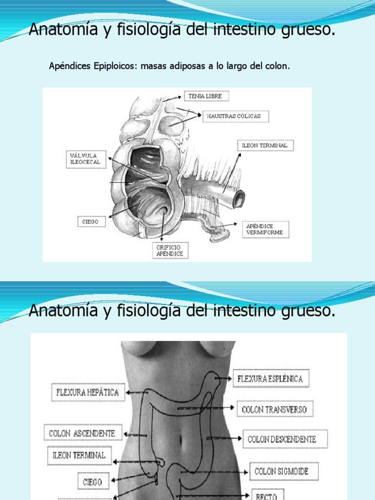 Fisiologia Colon