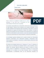02 - Ciclo Del Paludismo_es