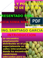 Pos Cosecha de La Tunaxxxxxx