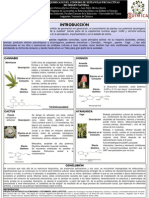 Relaciones Químicas en el Consumo de Sustancias Psicoactivas de Origen Natural