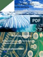 antarctica food chain
