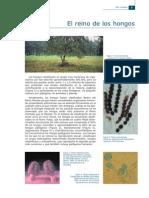 PDF Hongos