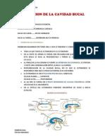 EMBRIOLOGIA 2dO HEMISEMESTRE 2.pdf