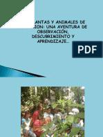 Presentacion Propuesta Fauna y Flora