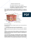 Anatomia y Fisiologia de La Piel