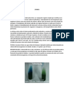Pruebas Bioquimicas Para Enteorbacteria
