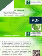 Plan de Reforestacion en Cartagena