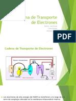 Cadena de Transporte de ElectronesDanie