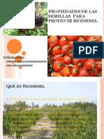Propiedades de Las Semillas Para Producir Biodiesel222