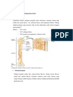 Komponen Penyusun Tulang Dan Sendi