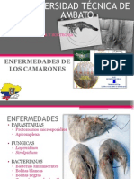 zootecniacamarones2-140103175303-phpapp02-140108153247-phpapp01