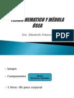 Tejido Hematico y Médula Ósea