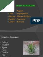 Abaca y Cabuya