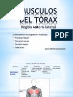 Musculos Del Torax