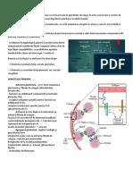 hemostaza primara lp1