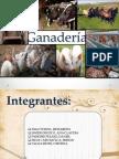 Expo de Ganaderia en El Peru