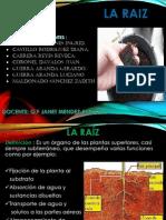 EXPO RAIZ