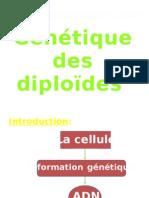Génétique des diploïdes