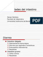 Enfermedades Del Intestino