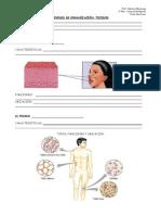 BIOLOGÍA 1º - Tejidos.pdf