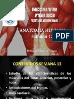 Anatomia Semana 13