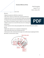 Brainstem Student Notes