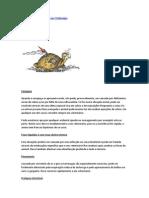 Doenças Mais Frequentes Nas Tartarugas