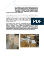 Práctica 7 de Bioquímica