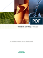 Bulletin 2033C Western Blotting Products