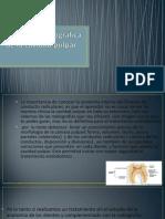 Características Morfológicas de La Cavidad Pulpar en Dientes
