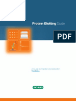 Bulletin 2895 Protein Blotting Guide