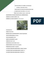 Informe Jardin Botanico