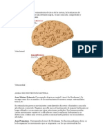 Areas Cerebrales de Brodmann