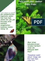 Pelajaran Dari Seekor Kupu-kupu
