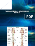 Vascularidad Medula Espinal