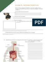 Guia 1 Sistema Digestivo1