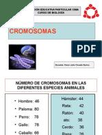 Cromosomas Caceda Colegio Cima
