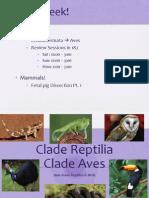 Week 10 - Reptilia Aves