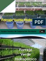 143647097-Forraje-Verde-Hidroponico.ppt