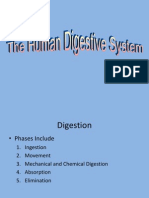 13-digestion