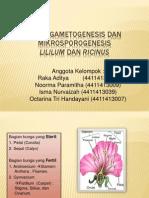 Kelompok 10 Mikrogametogenesis Dan Mikrosporogenesis Lilium Dan Ricinus