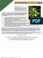 Edible Plants of Northern Idaho