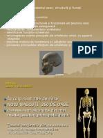 Sistemul osos- structură şi funcţii.ppt
