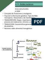 Clase Acidos Nucleicos