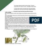 Waktu pembungaan tanaman kelapa tergantung pada varietas kelapa.docx