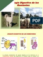 Fisiologia Digestiva de Los Rumiantes- Ict