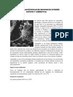 Estructuras Fúngicas de Hongos de Interés Clínico y Ambiental