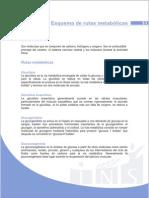 Esquema_rutas_metabolicashrhj.pdf