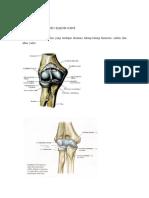 Anatomi Art Cubiti, Mp